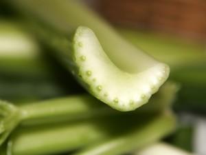 Celery Xylem & Phloem